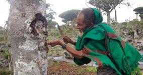Podílíme se na záchraně milion let starého lesa